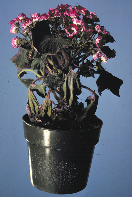 Throw out plastic pots if plants grown in them have suffered from a root rot.