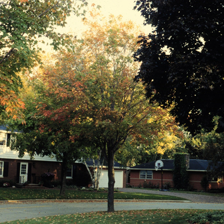 A thinning canopy with red or yellow leaves can indicate a root/crown rot problem.