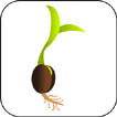 Germinating Seed Icon