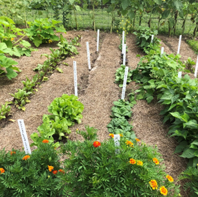 Careful site selection and planning can help you maximize your gardening success.
